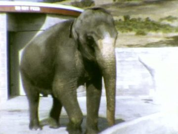 Effie Elephant at Knowland Park Zoo – 1964